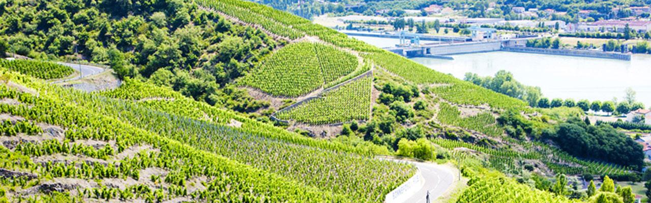 rhone-vineyards-syrah11